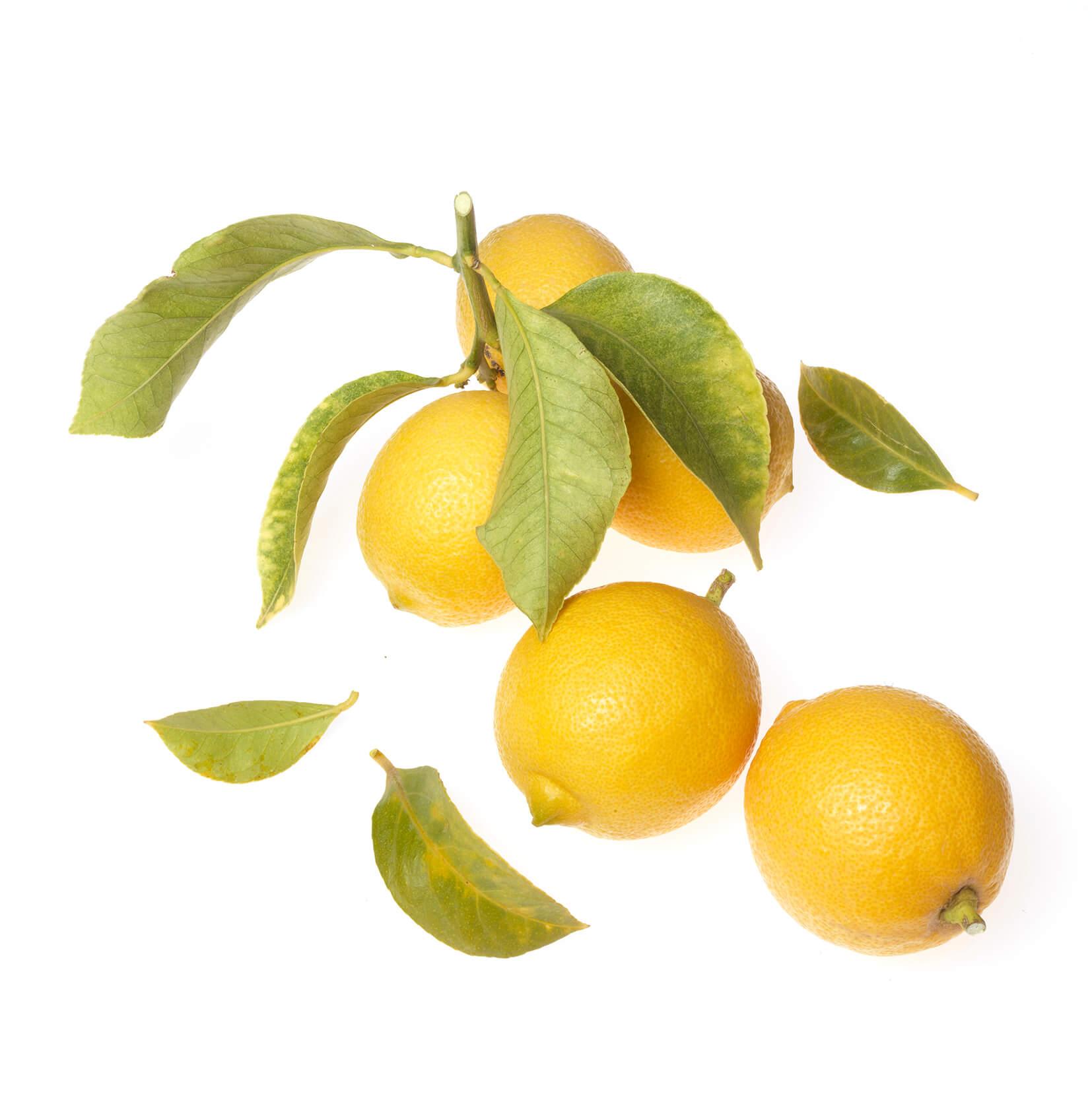 Offrande Citron 2398