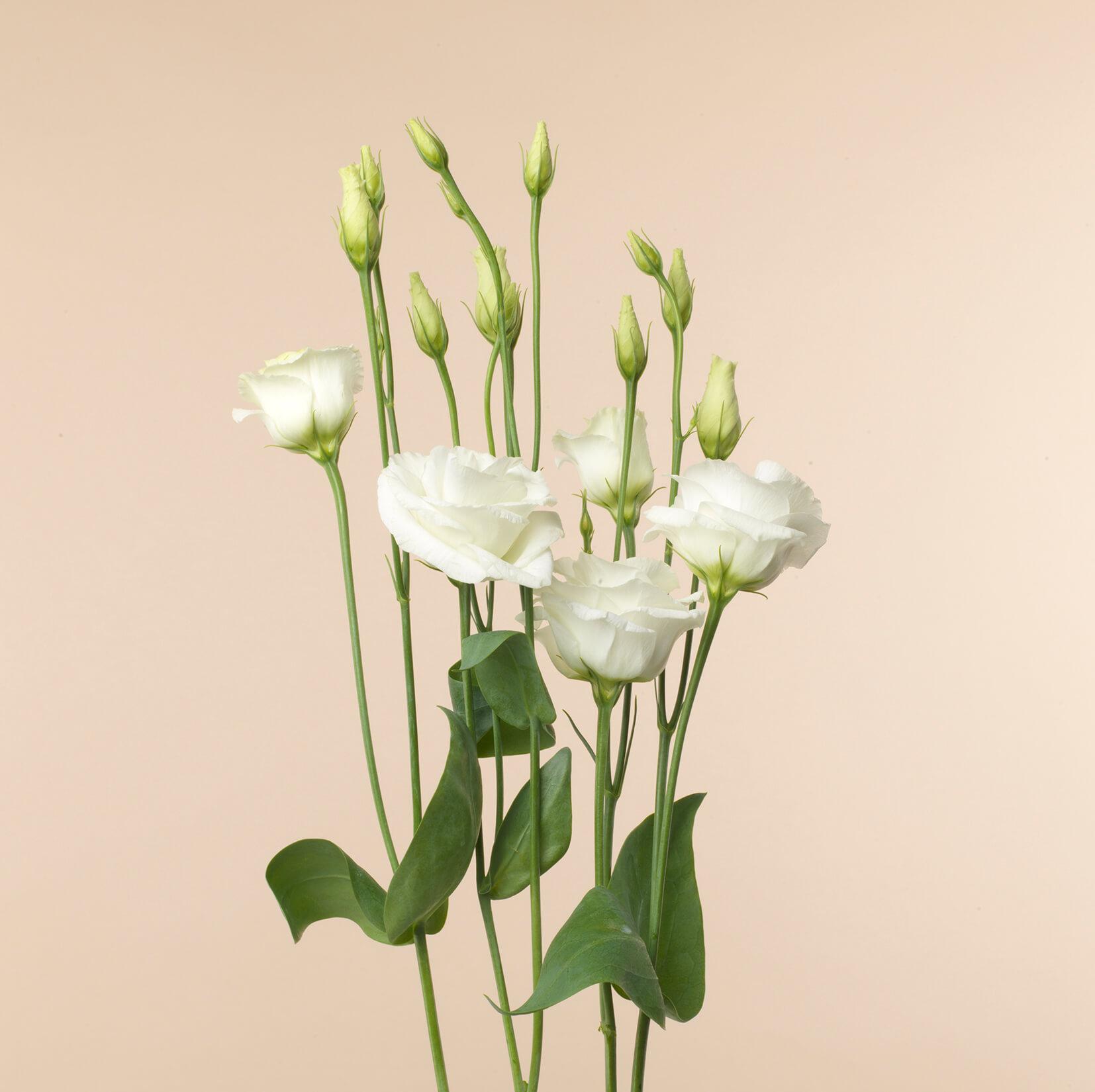 Offrande Petites fleurs 4072